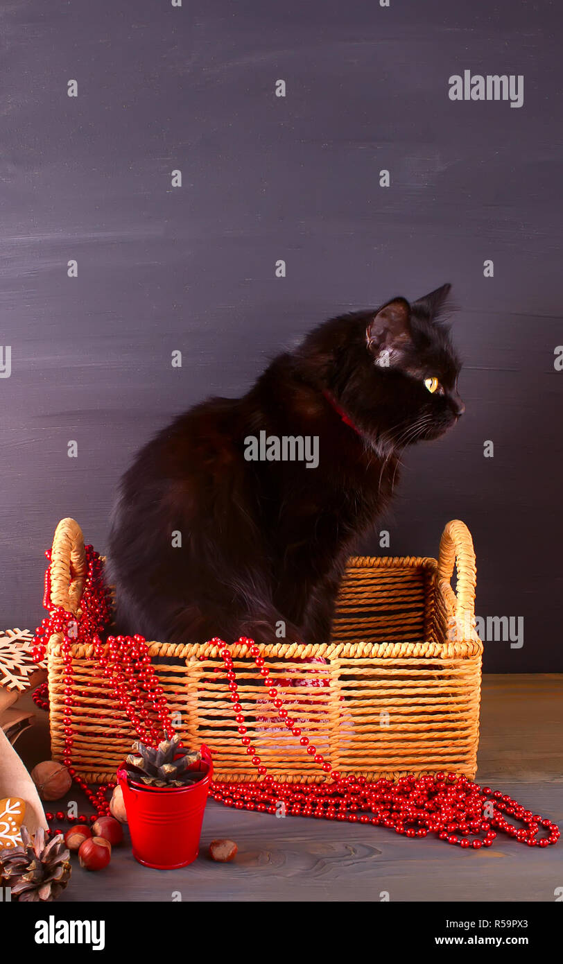 Funny Black Cat In Basket On The Wooden Table Christmas