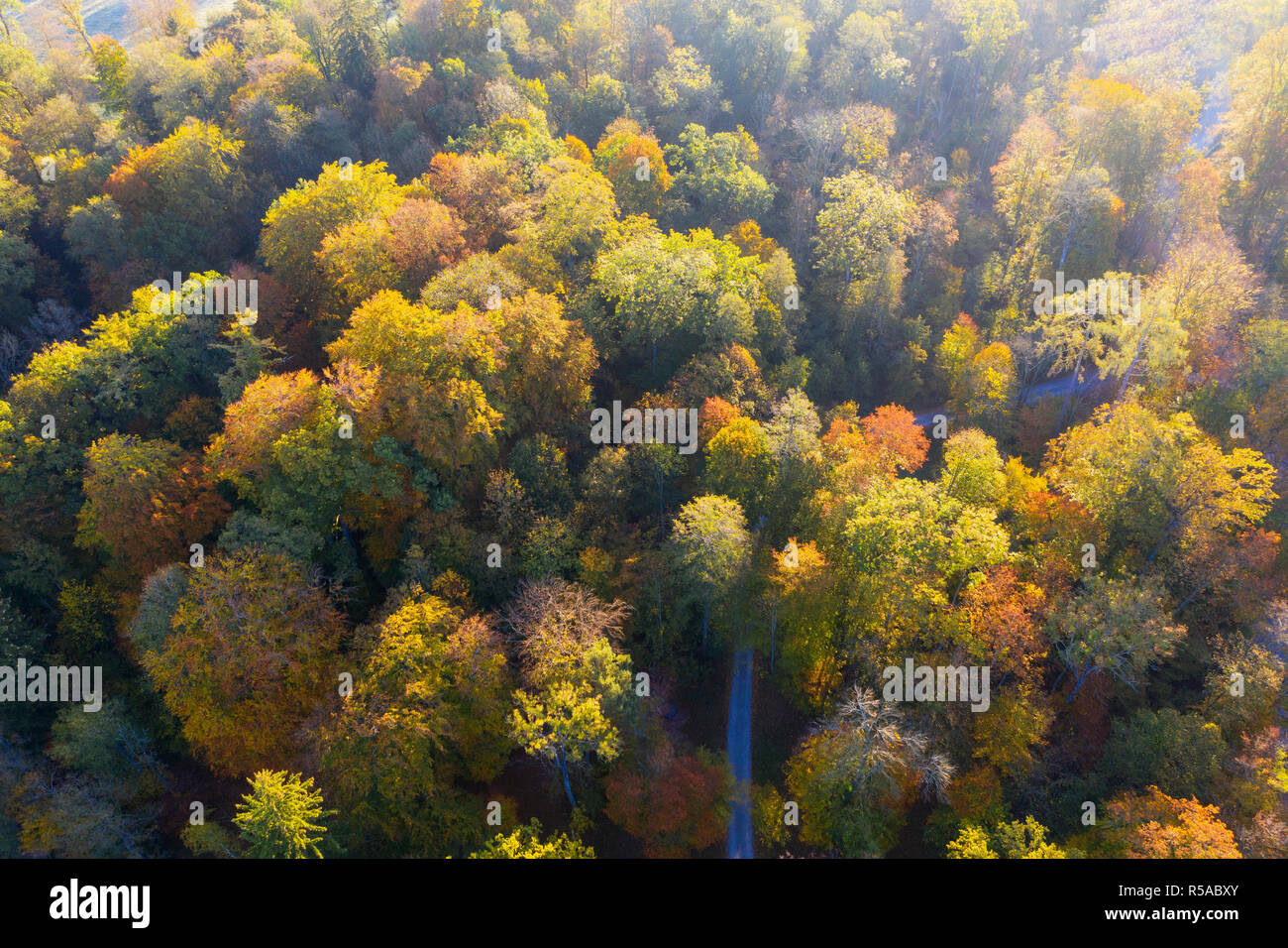 Autumnal deciduous forest, drone shot, Upper Bavaria, Bavaria, Germany - Stock Image