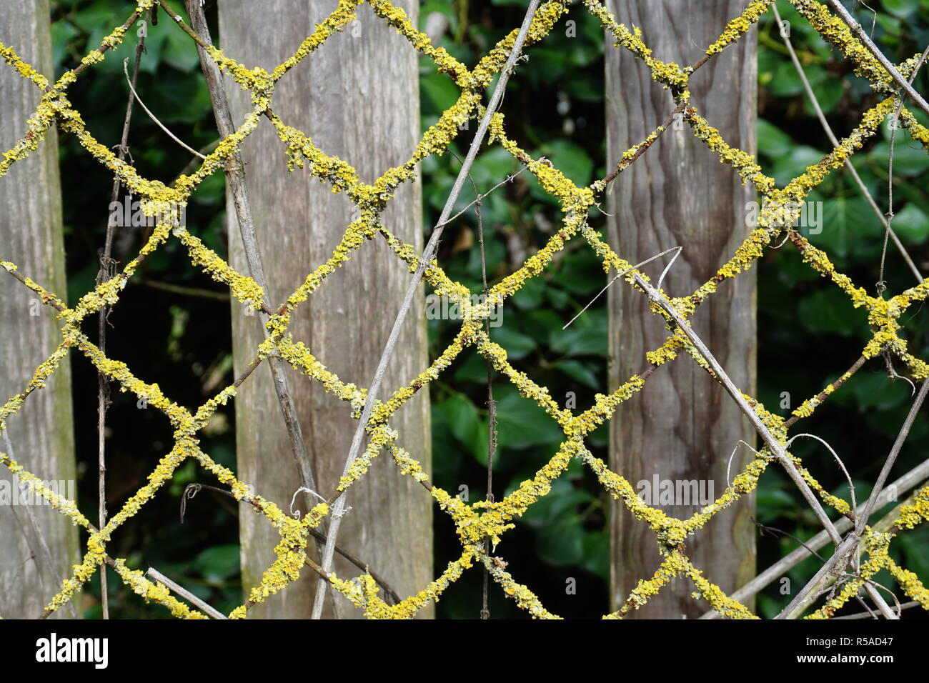 Close up on a mossy metal fence in the country in the fall - Stock Image
