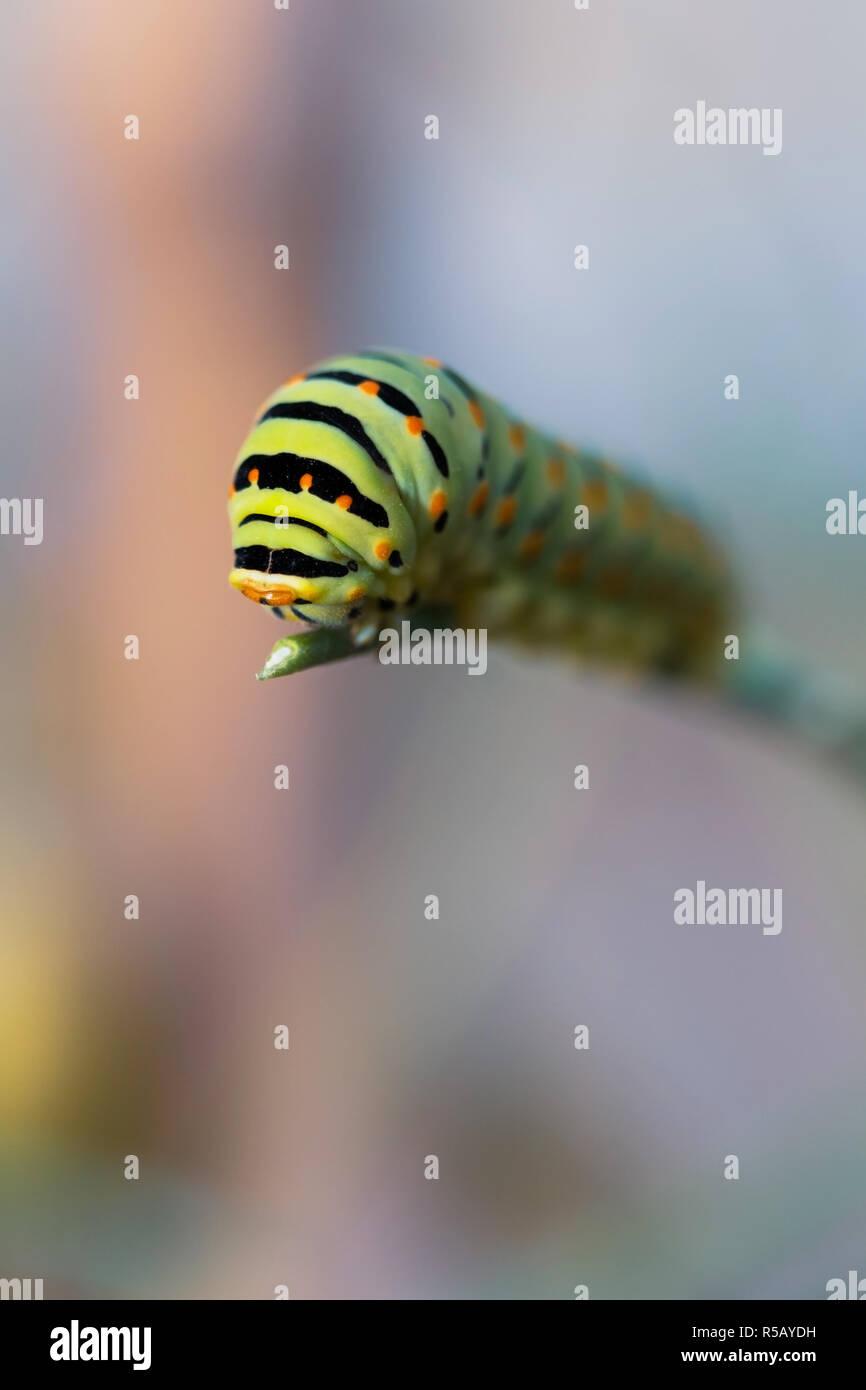 girls-green-caterpillar-orange-strip-your-wife