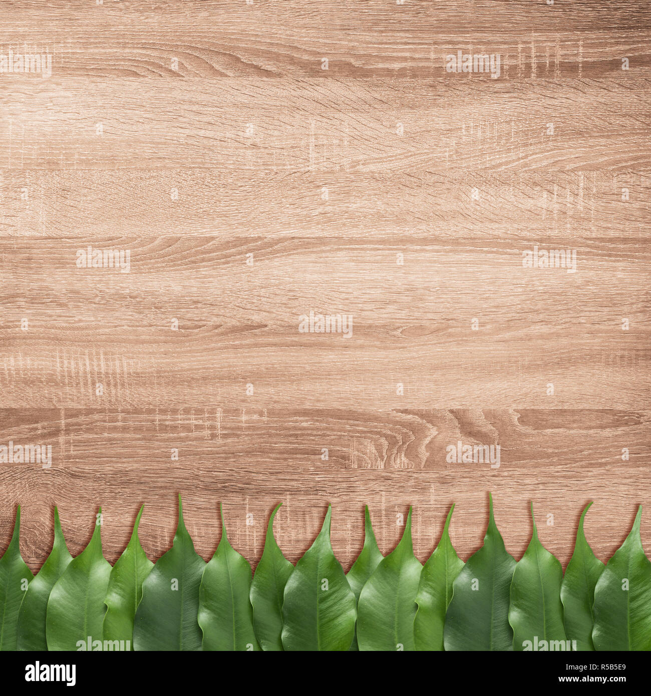 Ficus leaves on the brown wooden texture background Stock Photo
