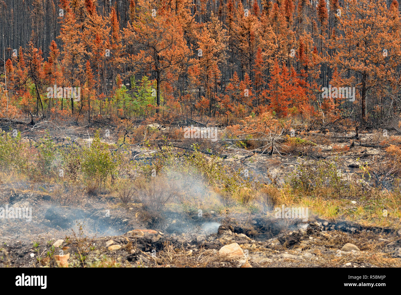Forest fire 'hot spot' smoking near Hwy 3, Highway 3 to Yellowknife, Northwest Territories, Canada - Stock Image