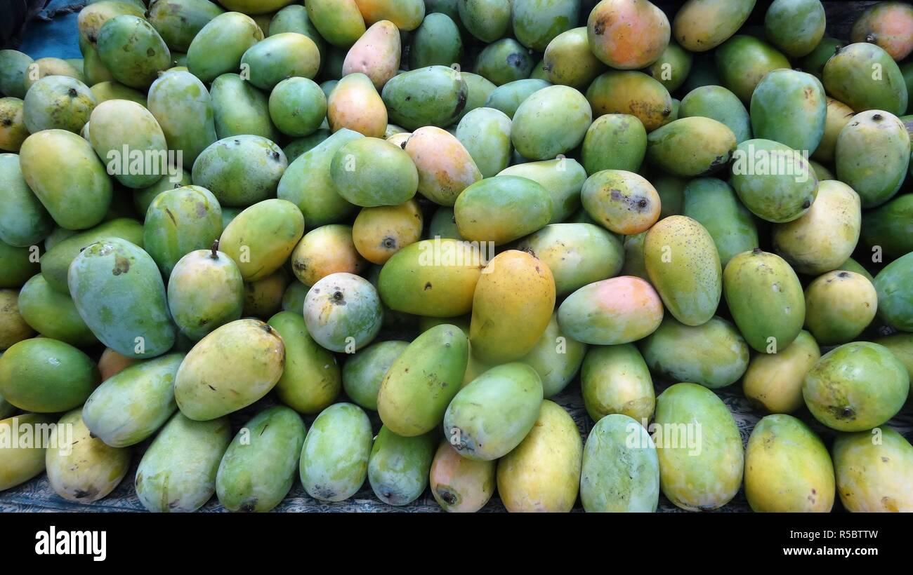 Fresh/Ripe Kesar mangoes for sale in the market-Gujarat/India - Stock Image