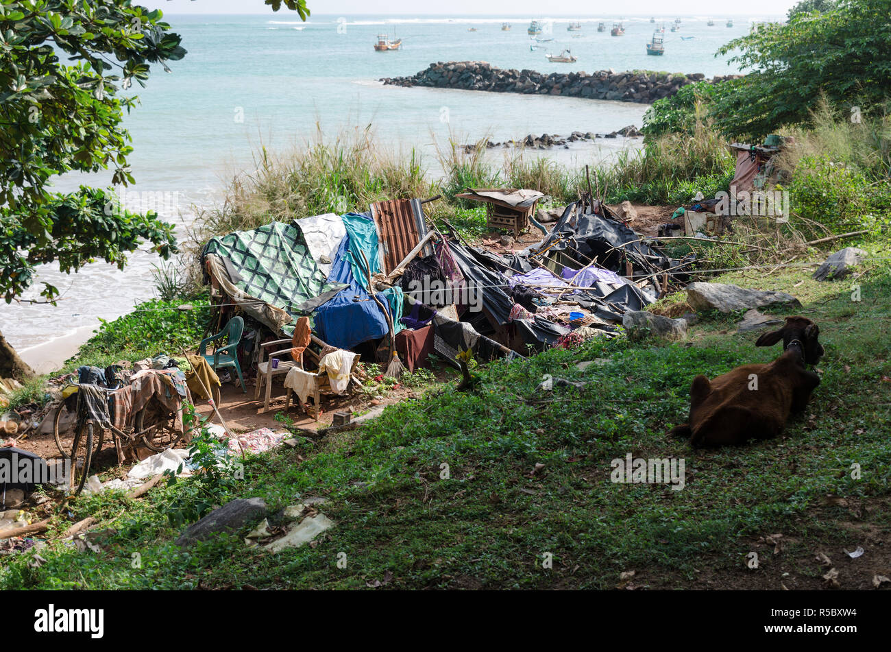 Place for life of homeless people, near beach, cow. Concept of poverty and deprivation, Overpopulation, social problems with housing. - Stock Image