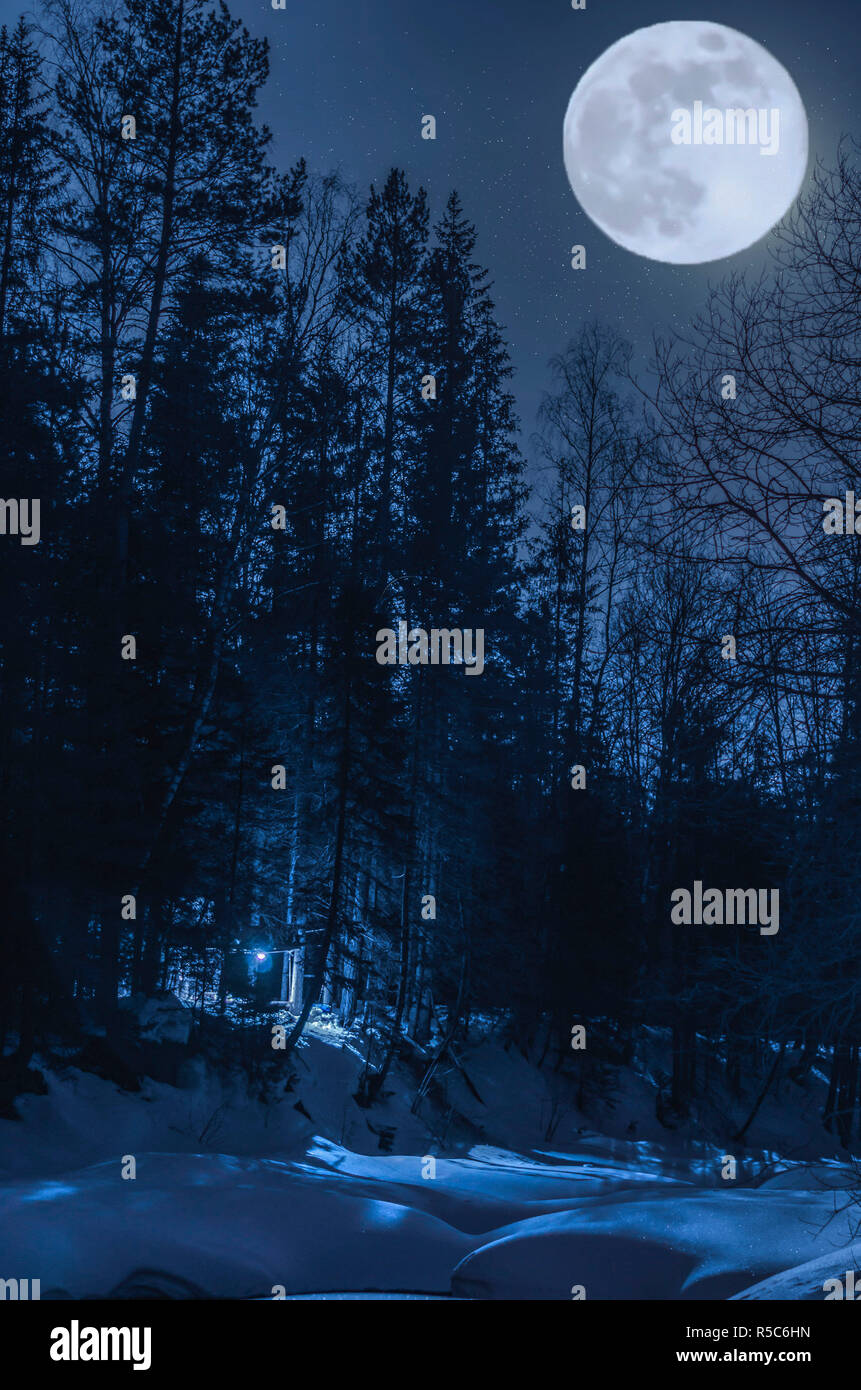 Night winter forest in the moonlight - Stock Image