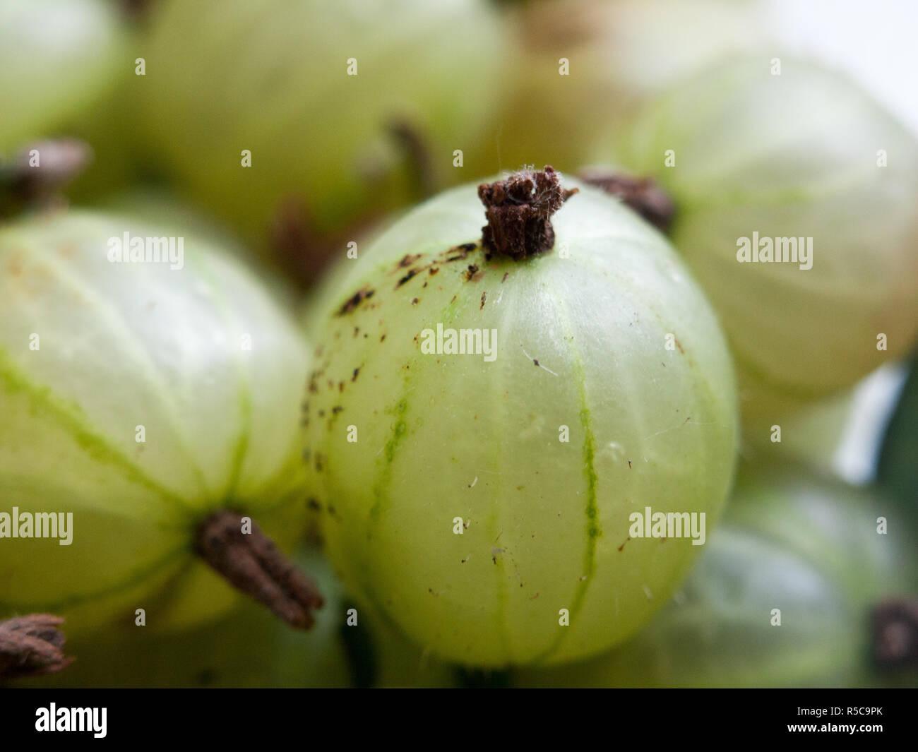 fresh organic gooseberries close up - Stock Image