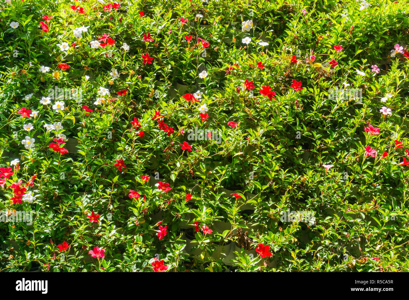 Wall Decorated With Red Flowers Eco Friendly Vertical Garden With