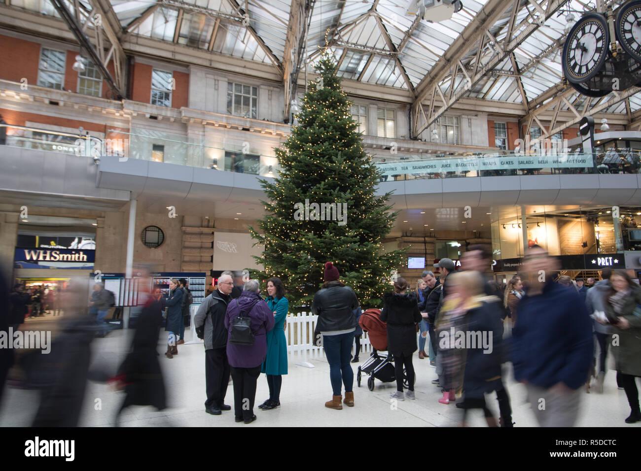 London Uk 1st December 2018 A Giant Christmas Tree Fern Is