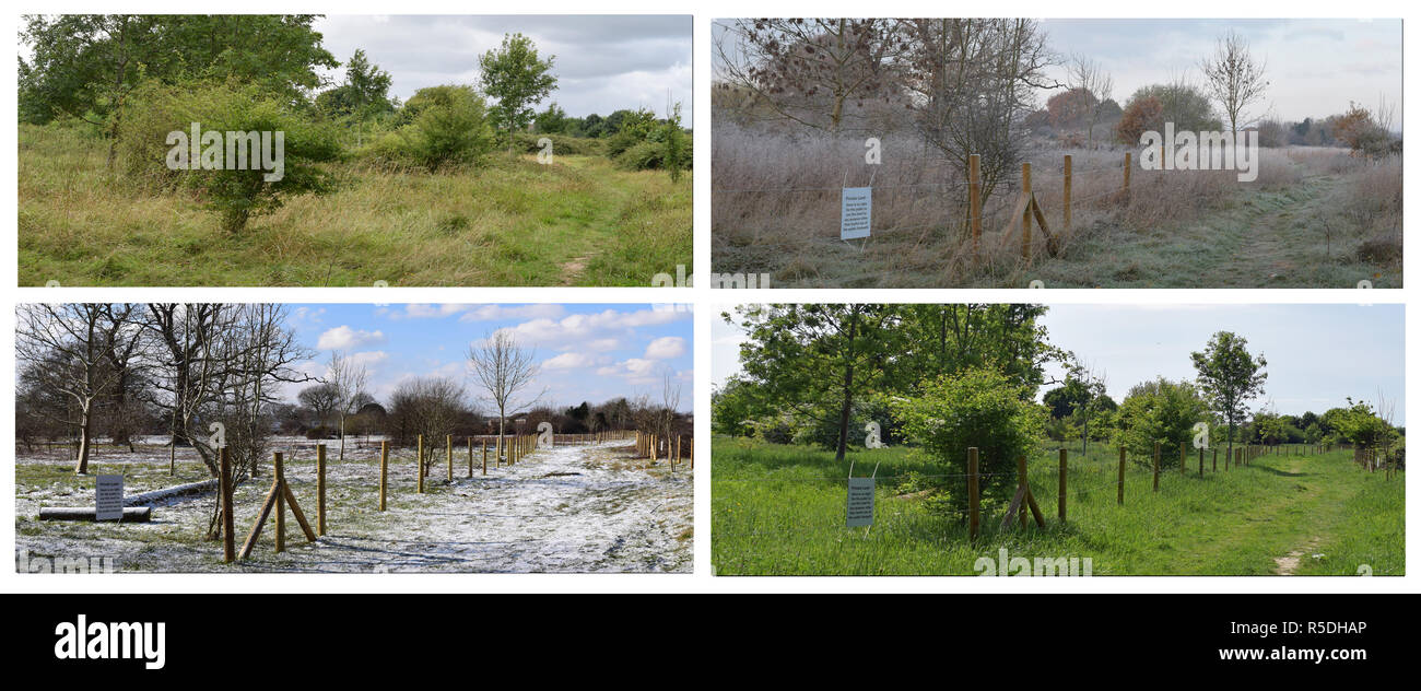 A Horley scene in four seasons - Stock Image
