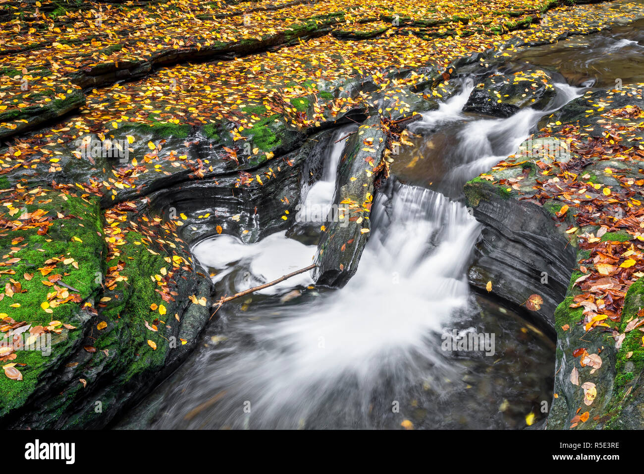 Whitewater splashes through rocky ledges scattered with colorful fallen autumn leaves in Watkins Glen State Park, New York. Stock Photo