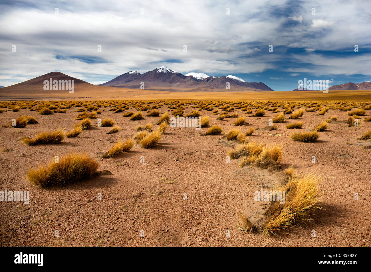 The Vast Landscape of the Altiplano in the Potosi Department of Bolivia - Stock Image