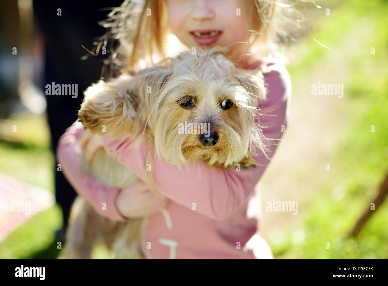 Cute Little Girl Holding Her Funny Yorkshire Terrier Dog Kids