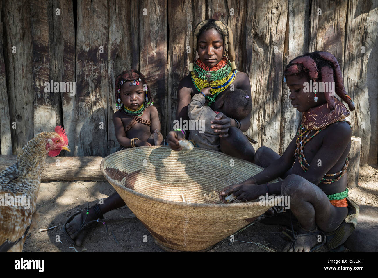 Muila family cutting off the kernels of the maize into a basket while a chicken is looking into it. - Stock Image