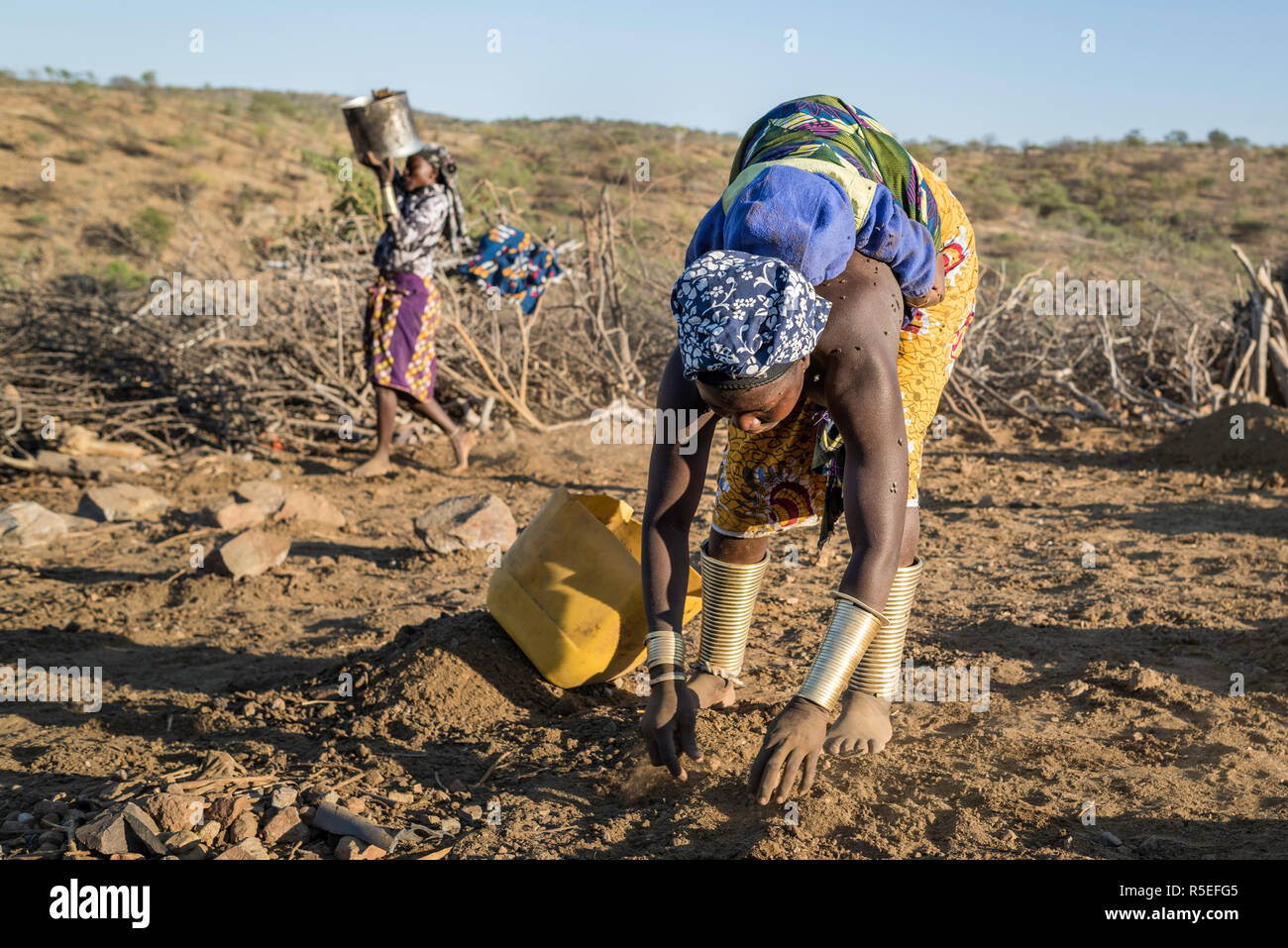 Mucubale women working in the field collecting sheep dung to use it as fertiliser. One of them carry her baby on her back while working. Stock Photo
