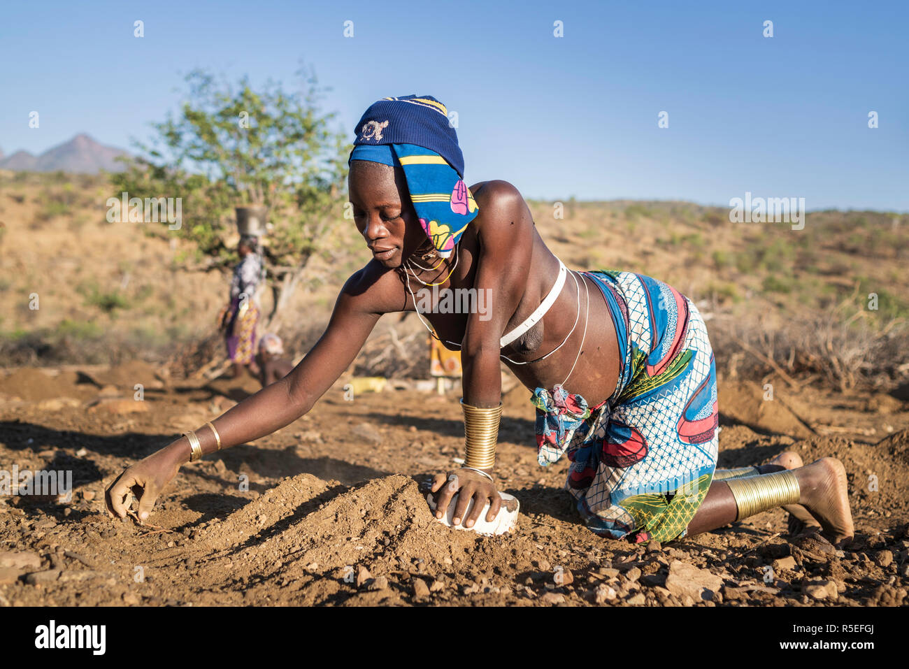 Mucubale women working in the field collecting sheep dung to use it as fertiliser. Stock Photo