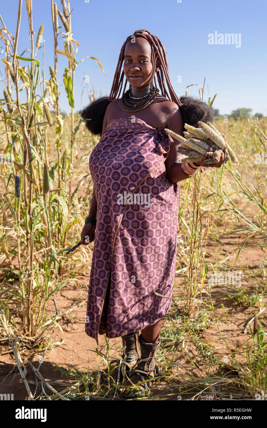 Portrait of a Himba woman with a bunch of millet on her hand while harvesting. - Stock Image