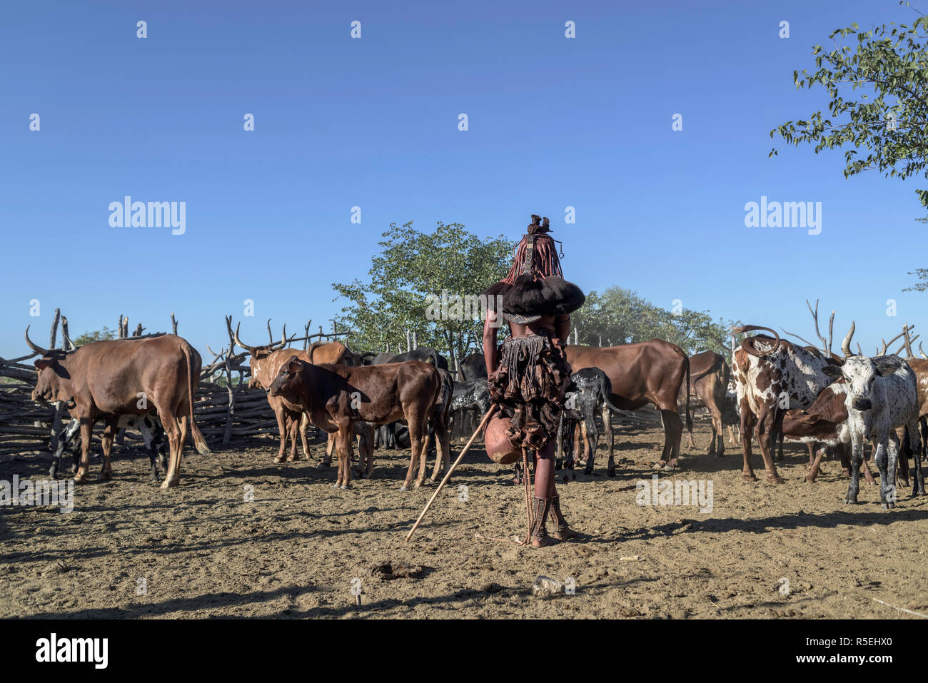 Himba woman standing inside the corral ready to milk the cows. Stock Photo