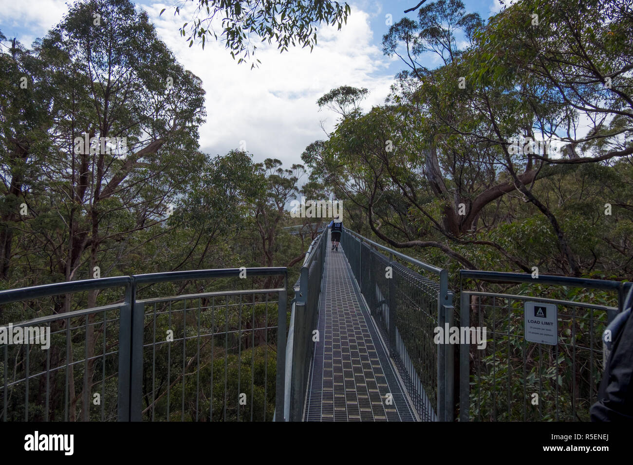 Enjoying the impressive metal walkway through the tingle trees at Valley of the Giants Tree Top Walk in Tingdale, Western Australia. - Stock Image