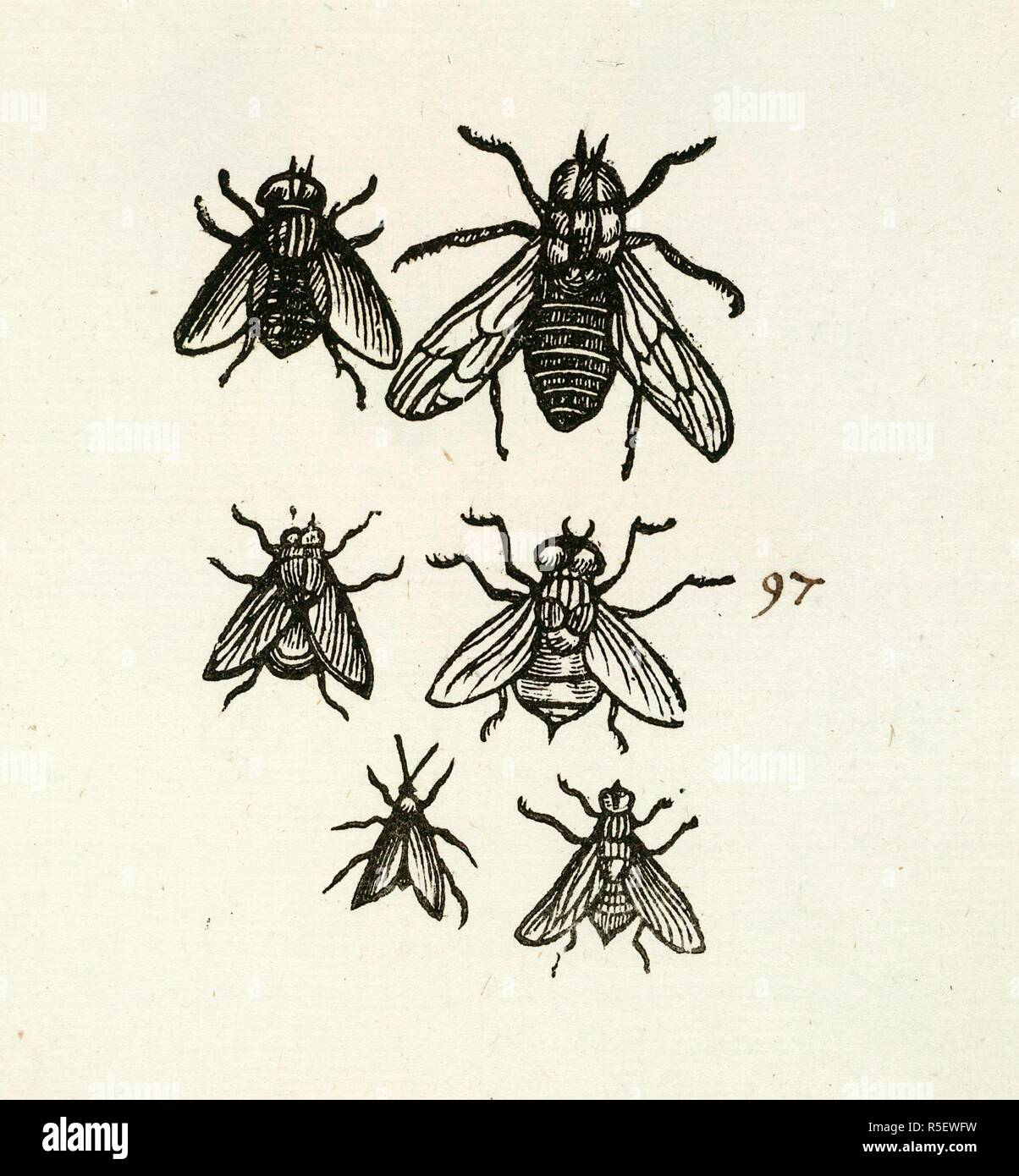 Six insects. [A Collection of proof impressions of wood-engravings of Insects, etc. On 240 leaves; preceded by 12 leaves containing water-colour drawings of Insects.].. [London? 1700?]. Source: C.107.e.91. Stock Photo