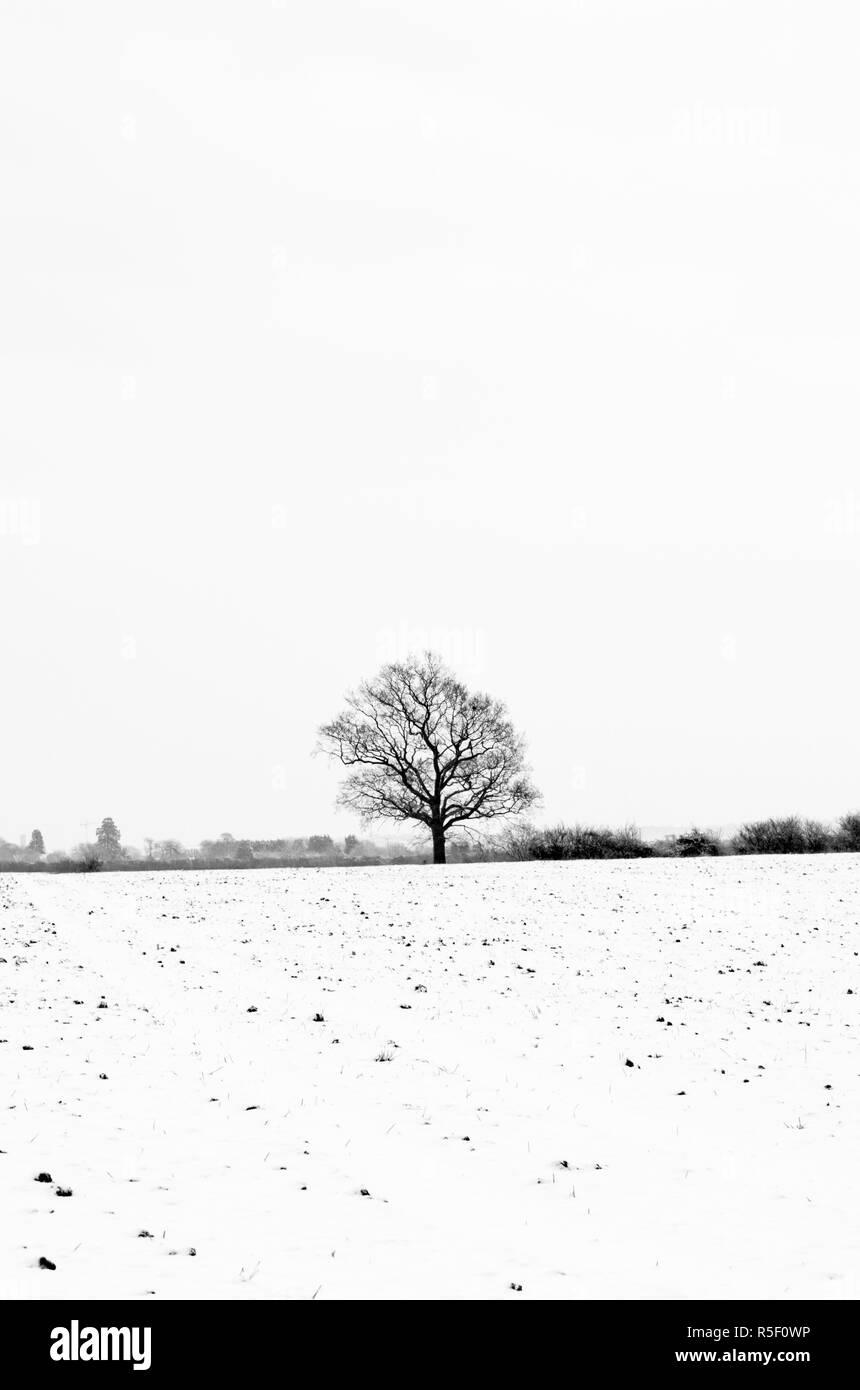 UK, England, Cambridgeshire, Comberton, Winter Fields - Stock Image