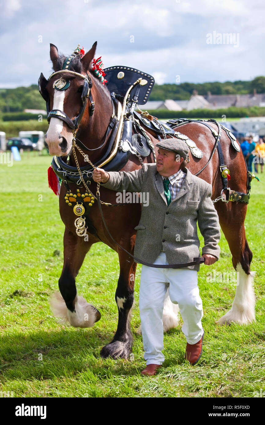 Prize Dray Horse competition, N. Devon Show, UK - Stock Image