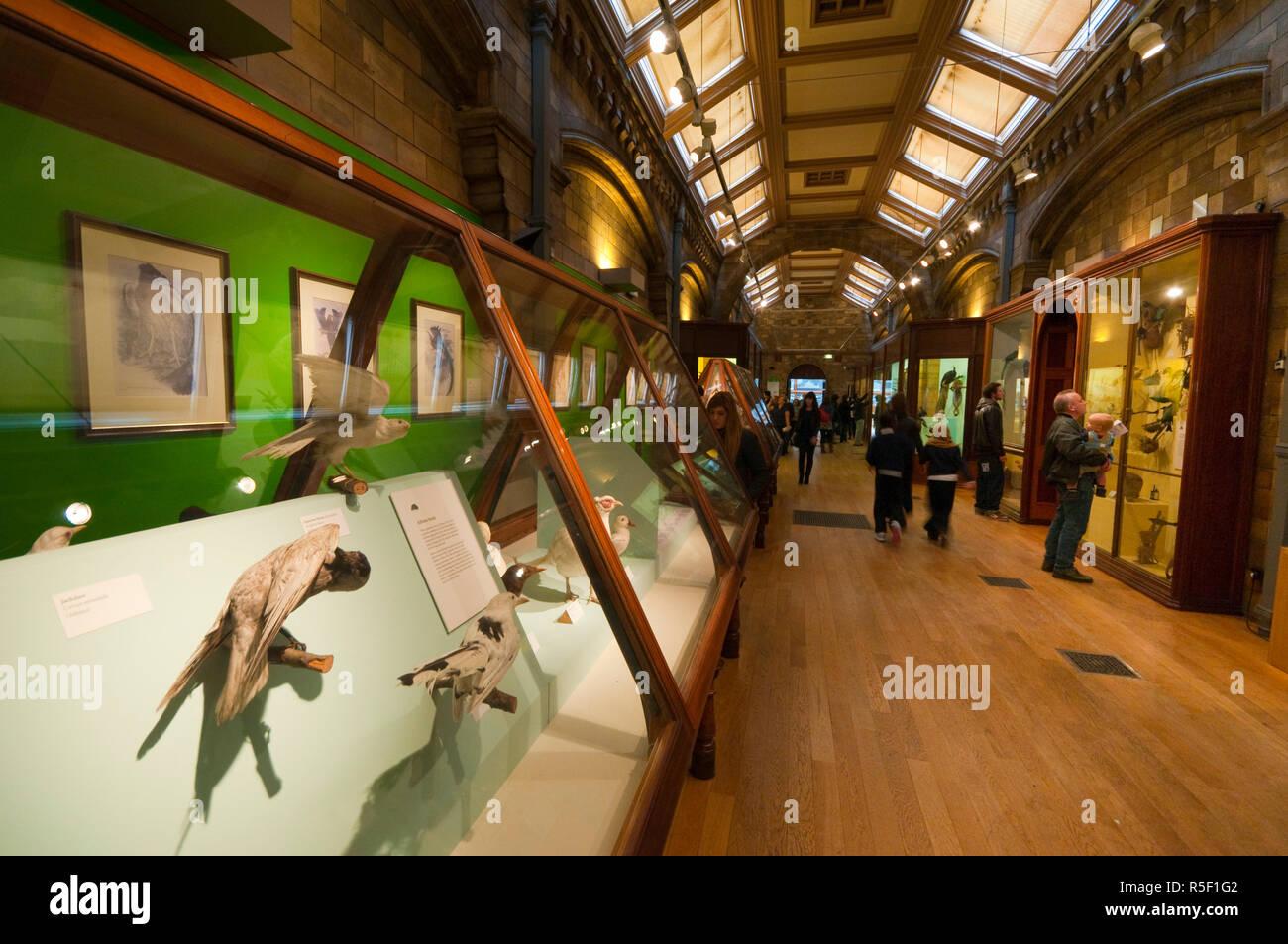 UK, Enlgland, London, South Kensington, Natural History Museum, Birds Gallery - Stock Image