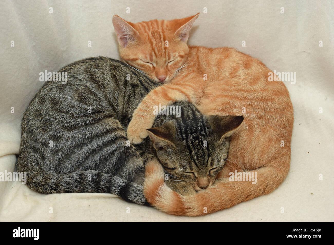 house cats Stock Photo