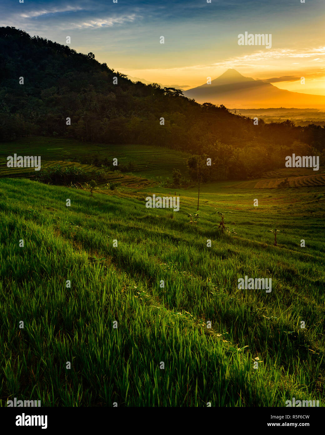 Beautiful sunrise in paddy terrace with merapi mountain in the background - Stock Image
