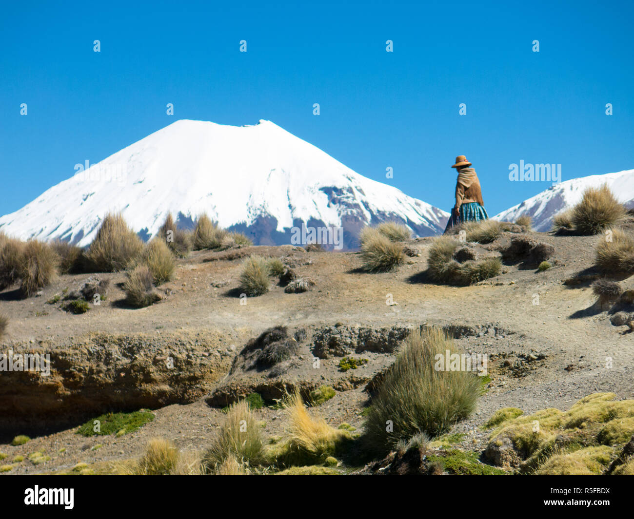 An Andean woman walks through the countryside, with the volcano Parinacota in the background. Natural Park of Sajama, Altiplano of Bolivia, South Amer - Stock Image
