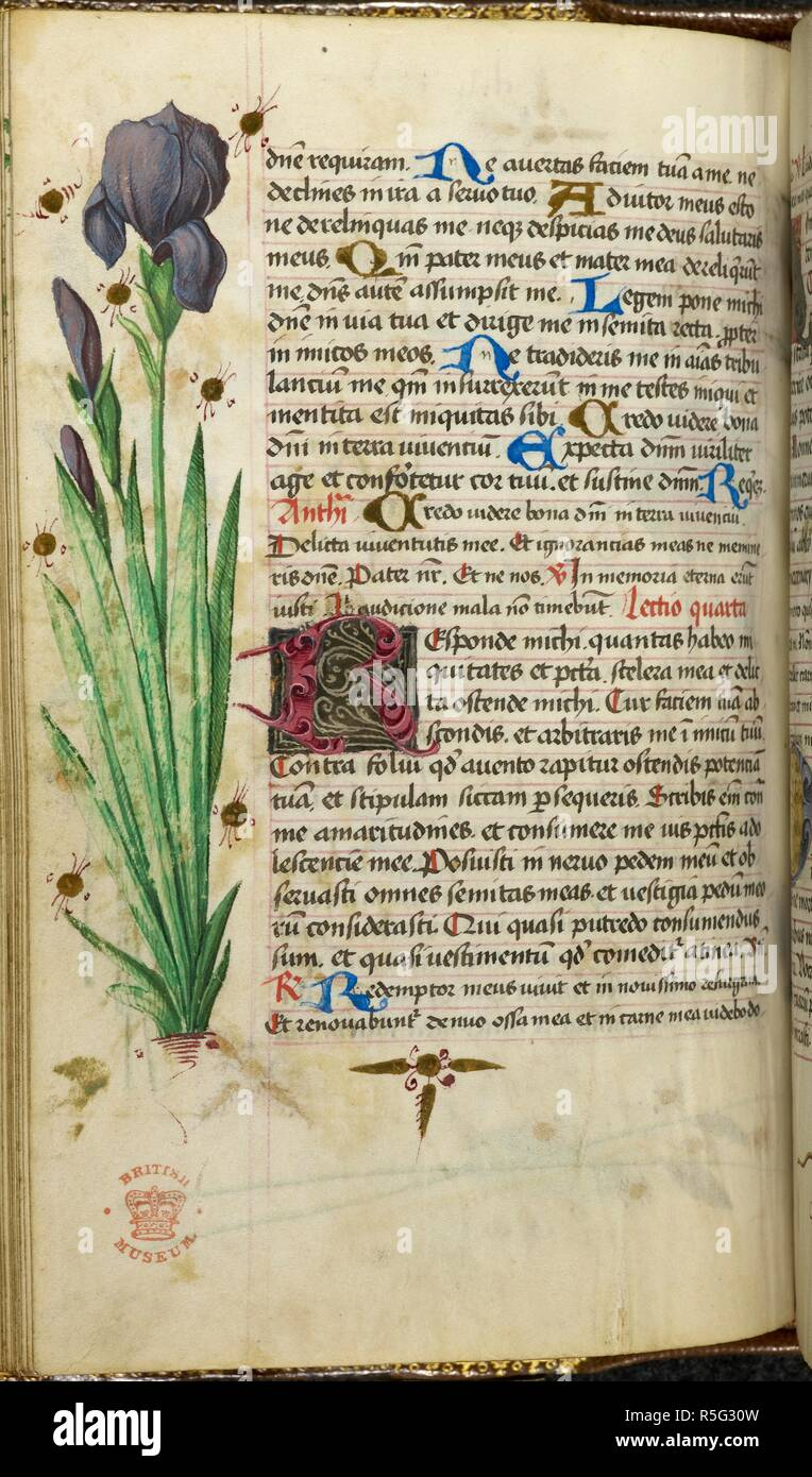 A Tall Iris Flower In A Book Of Hours Book Of Hours Use Of Worms