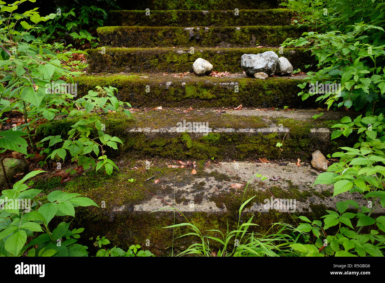 stairs overgrown with moss and overgrown with stones and plants - Stock Image