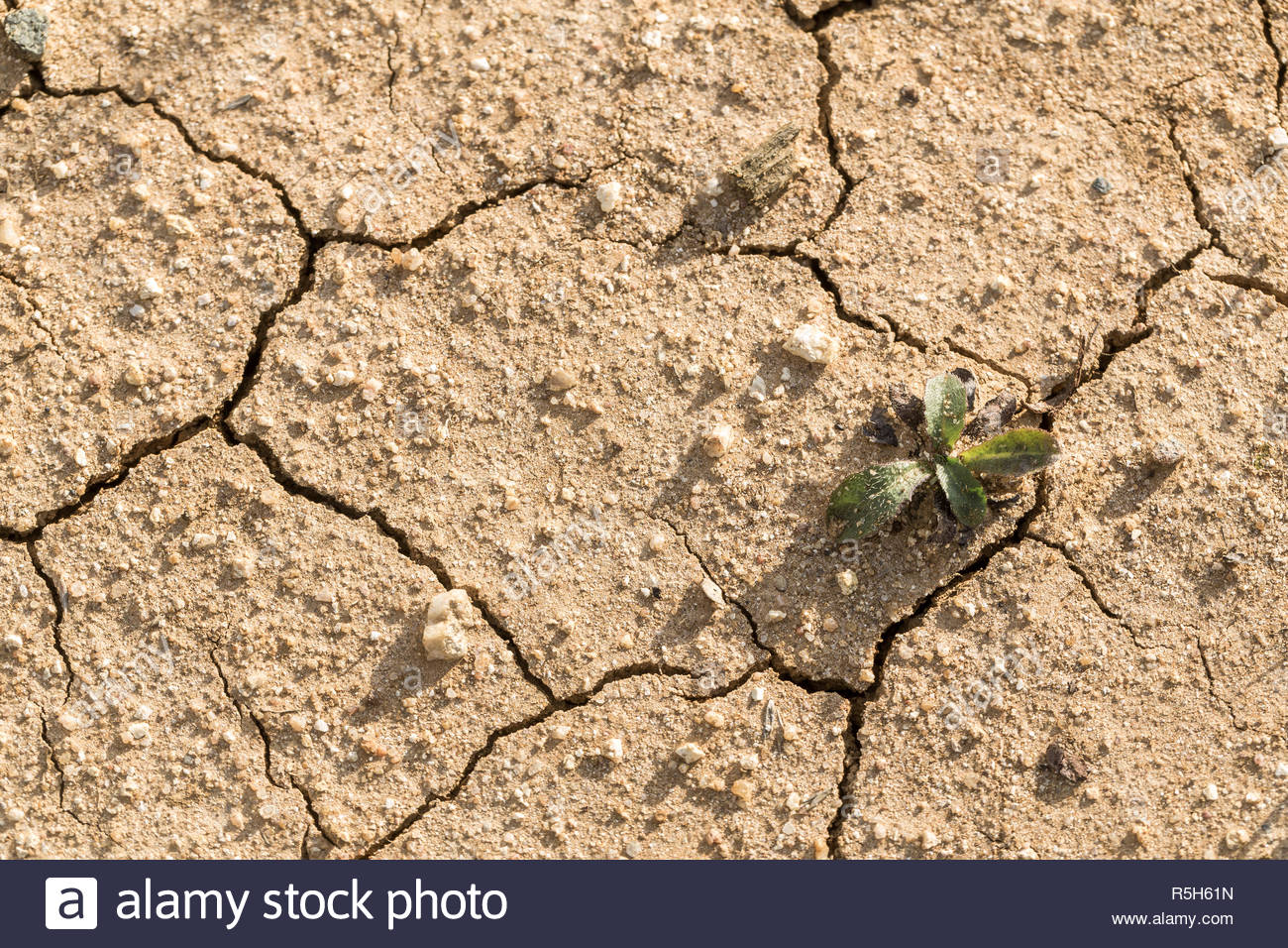 Dry and cracked topsoil in drought-affected farming area. Central Victoria. - Stock Image