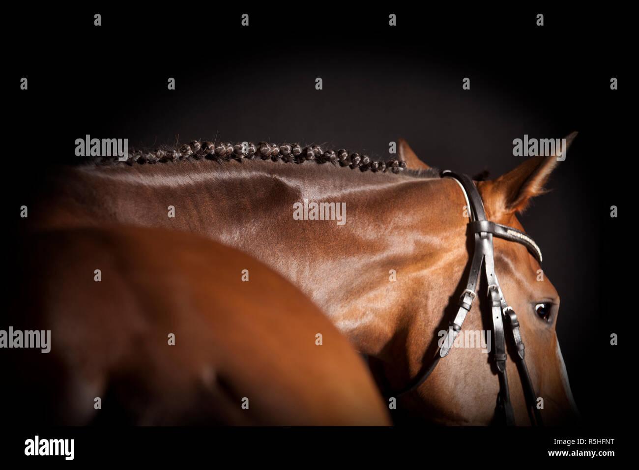 horse braided mane - Stock Image
