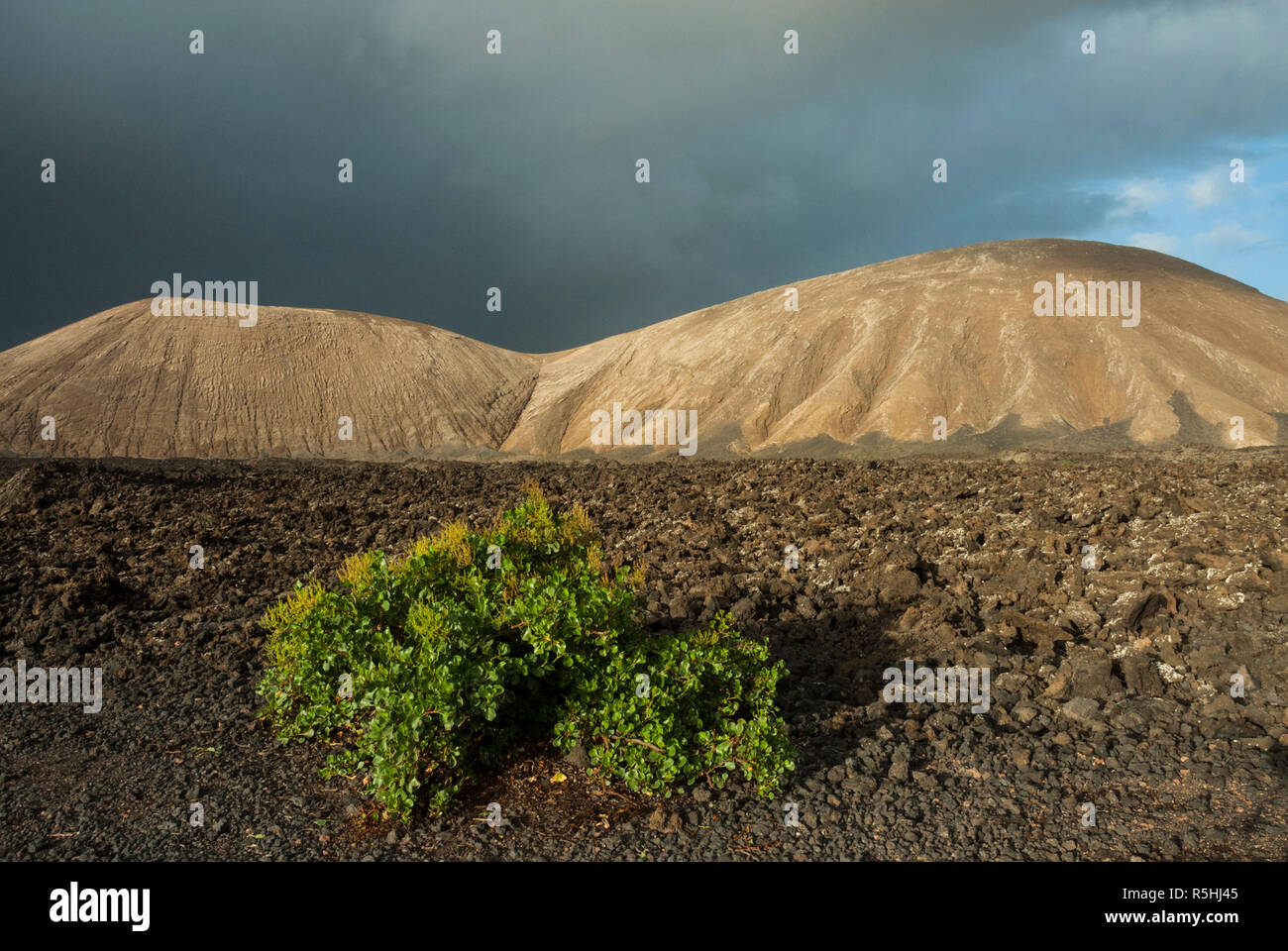 Volcanos and lava fields forming a dramatic landscape with little growing here in the Timanfaya National Park, Lanzarote, Canary islands. - Stock Image