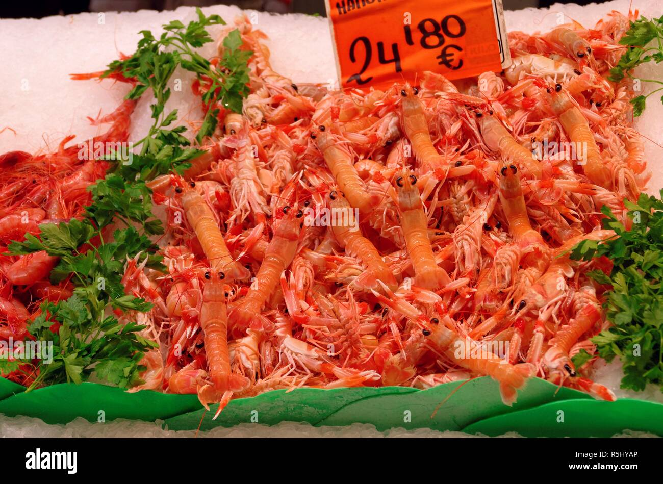 norway lobster - Stock Image