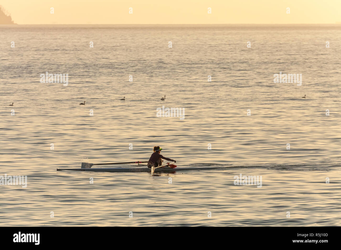 Woman is kayaking in San Francisco Bay at dawn, California, United States. - Stock Image