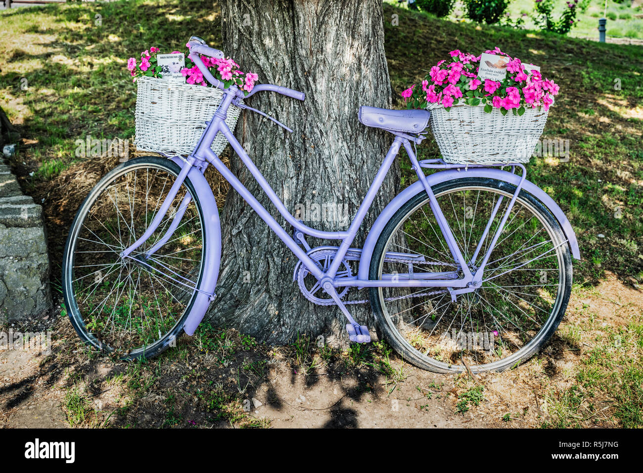 A violet bicycle stands at a tree. On the luggage carriers are two white baskets with flowers. The bike is located in Tihany, Hungary, Europe Stock Photo