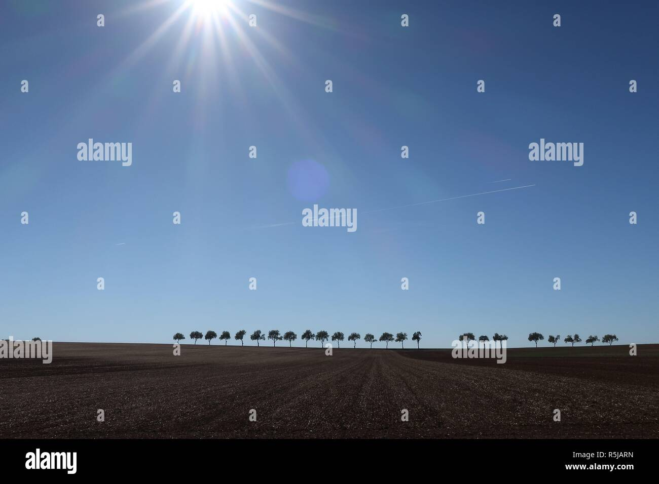 Row of trees in desolate landscape under the bright Champagne sun in France - Stock Image