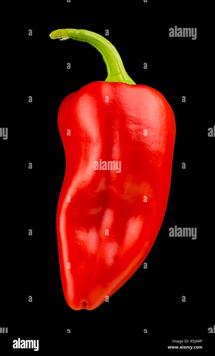 Red Gypsy Pepper on Black Background Stock Photo