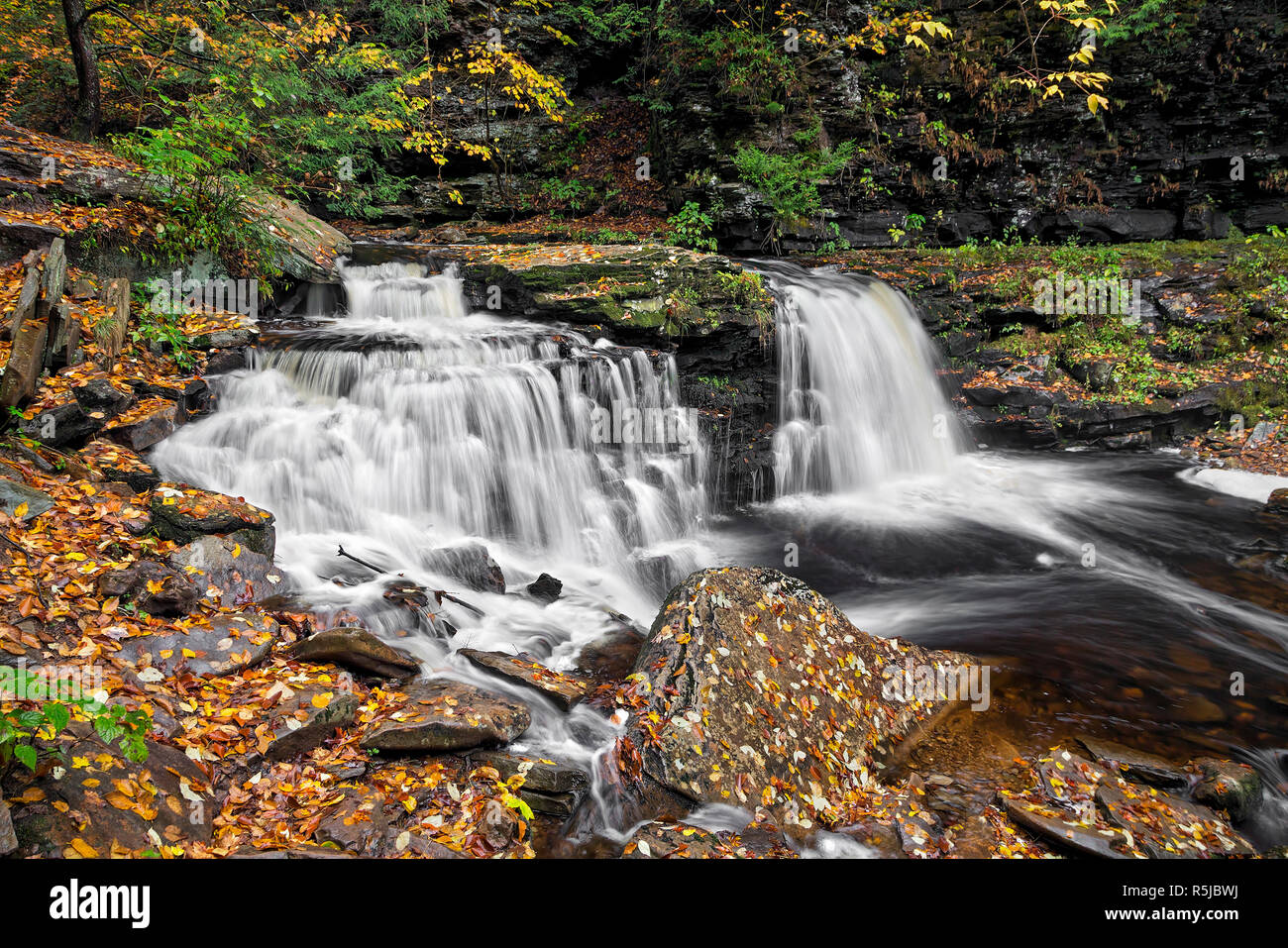 Cayuga Falls, a beautiful split waterfall in Ganoga Glen at Pennsylvania's Ricketts Glen State Park, flows through an autumn landscape blanketed in au Stock Photo