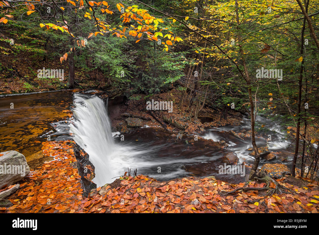 Oneida Falls, a beautiful waterfall in Ganoga Glen at Pennsylvania's Ricketts Glen State Park, flows through an autumn landscape as viewed from above. Stock Photo