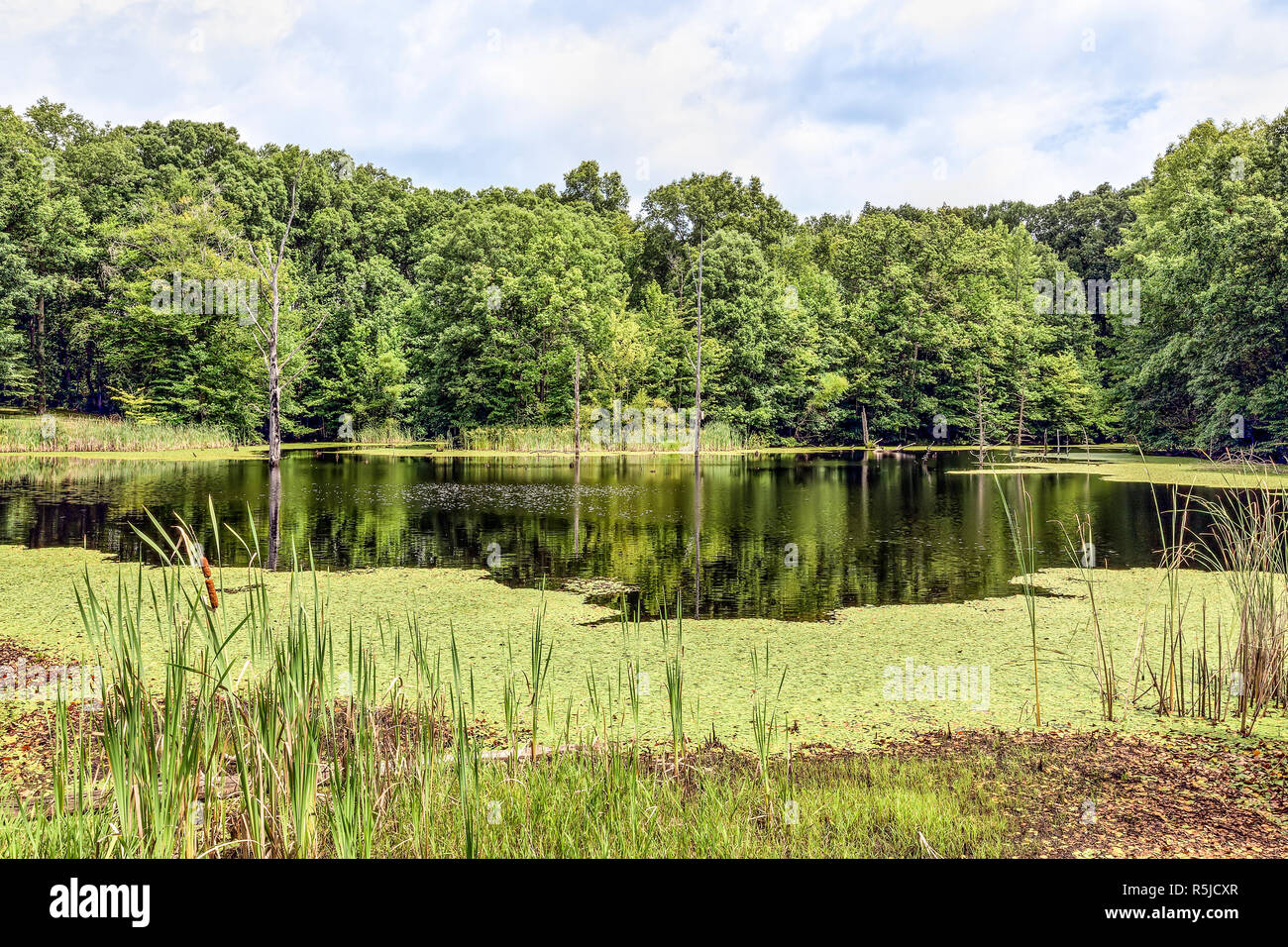 Aspen Pond, near North Vernon, Indiana, is surrounded by summer's greenery. Stock Photo