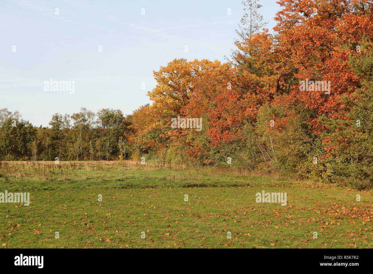 Herbst in Nordbrabant in Holland - Stock Image