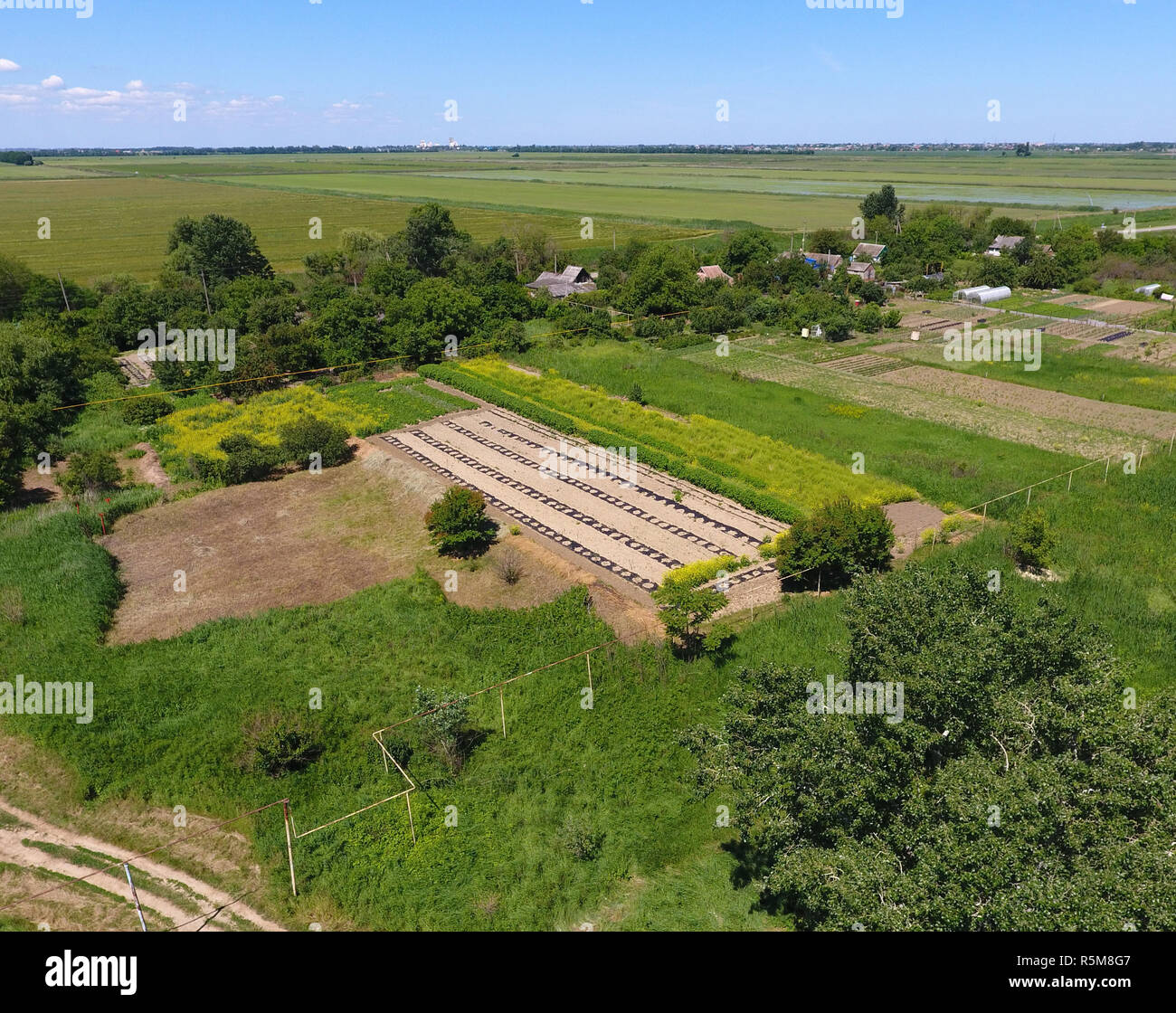 A garden bed with watermelons and melons sown under a film. Seeding melon under the film. Beds in the gardens, top view. - Stock Image