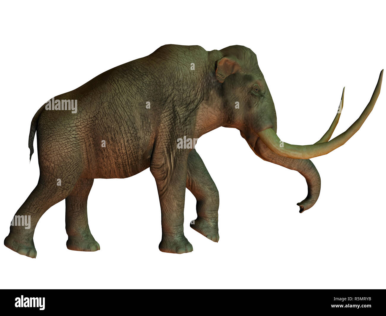 Columbian mammoth on White - Stock Image
