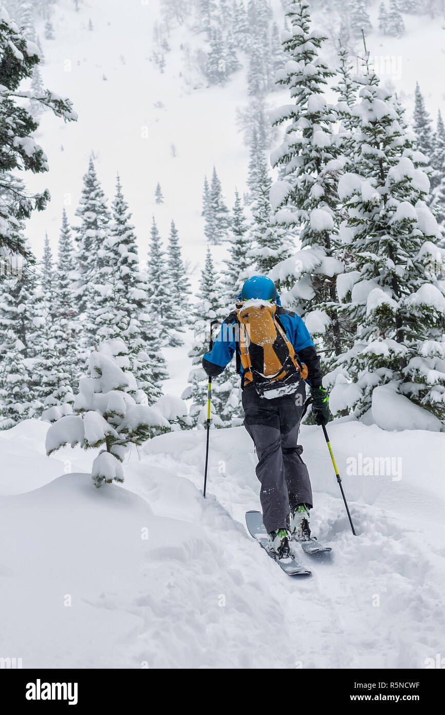 Male skier freeride skitur uphill in snow in winter forest - Stock Image