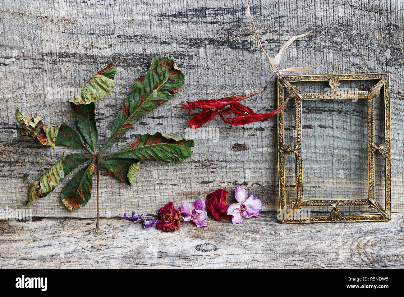 still life with flowers,leaves and a brass picture frame on wooden background Stock Photo