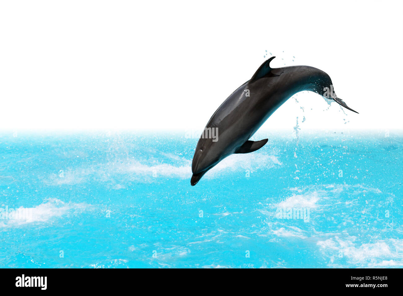 dolphin backgrounds.html
