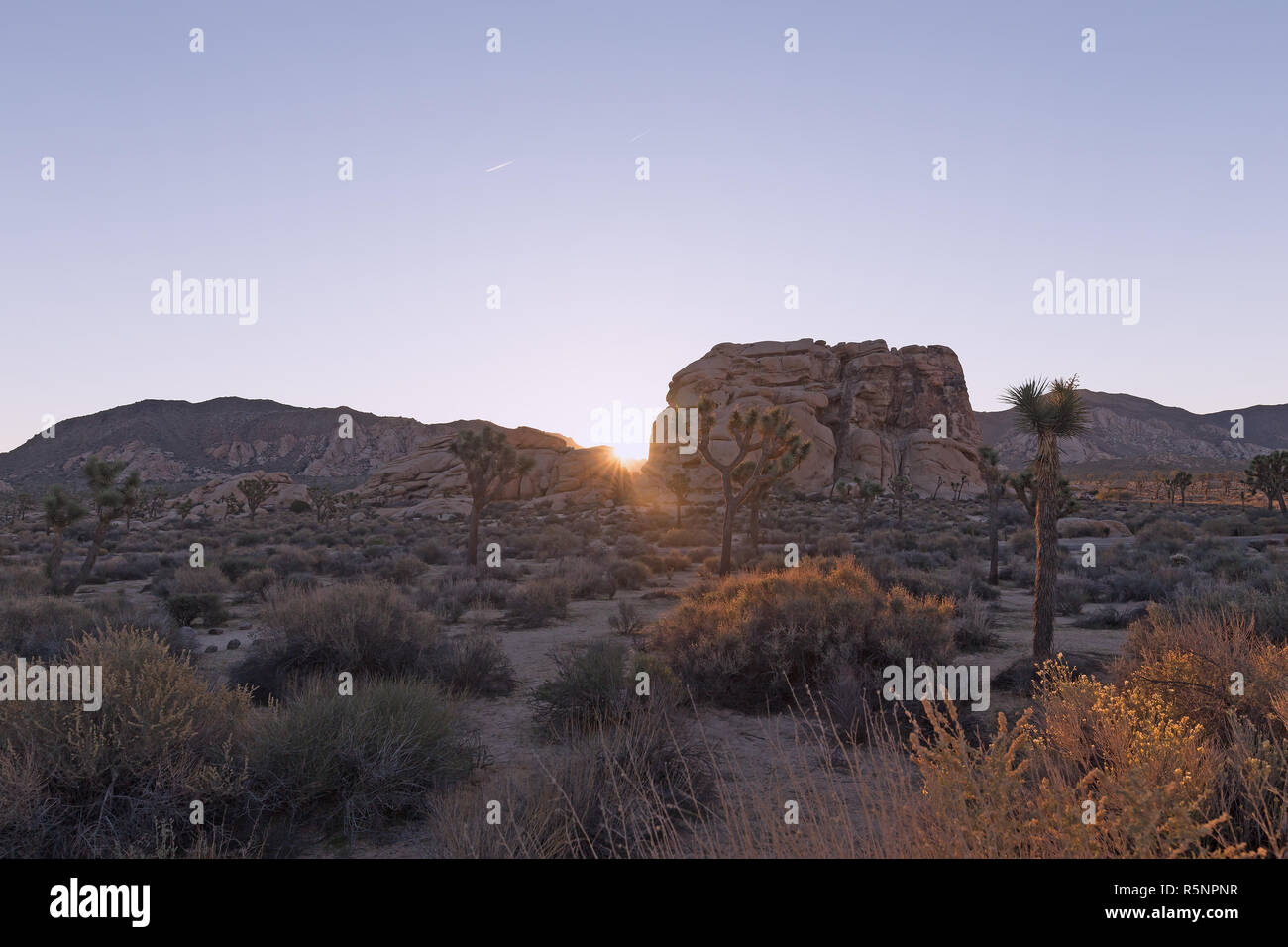 Sunrise in Joshua Tree National Park, California USA. High desert with stark rock formations and sparse vegetation under morning sunrays. - Stock Image