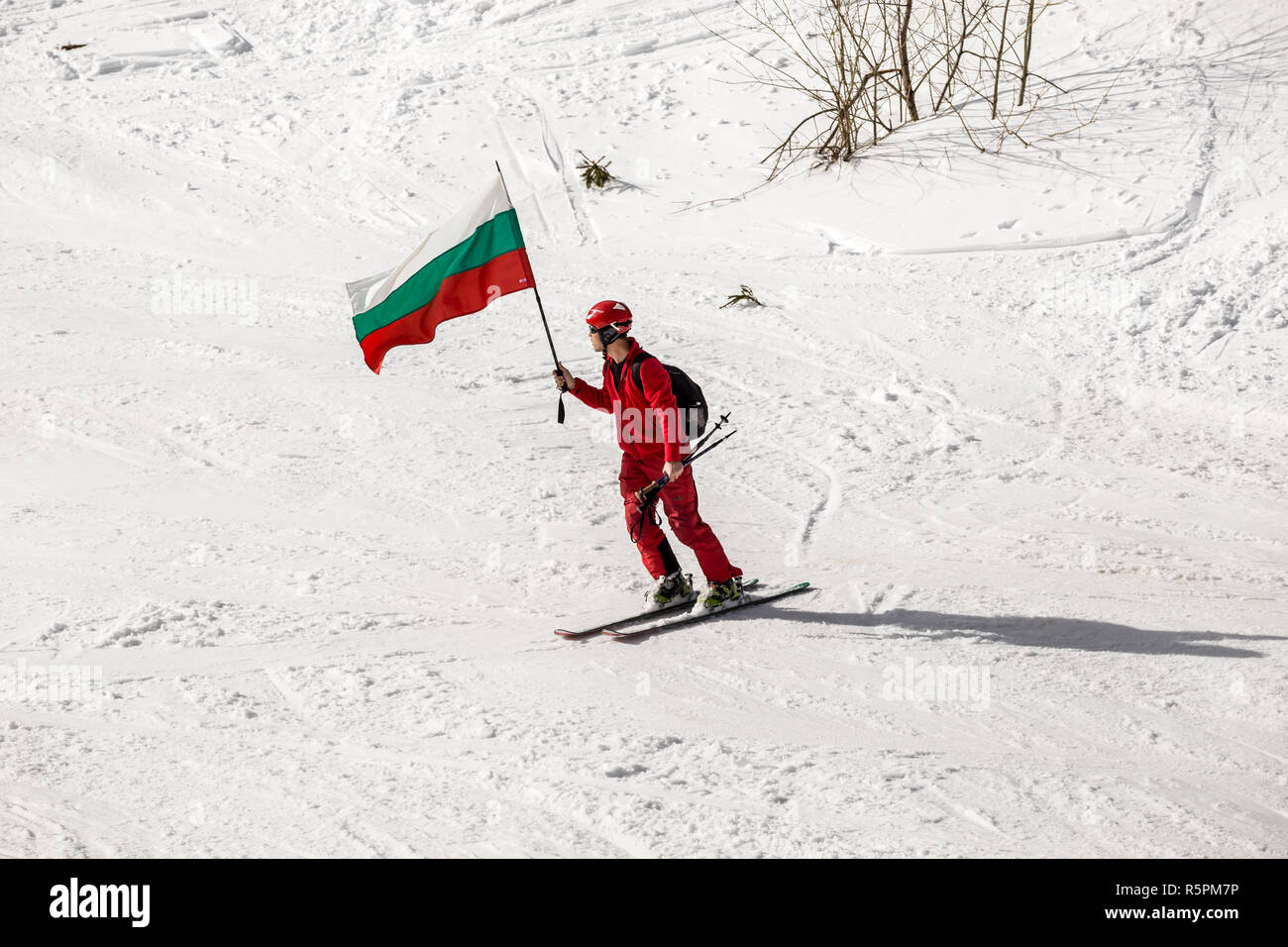 PAMPOROVO, BULGARIA - MARCH 03, 2017 - Skiing with Bulgarian flags at Pamporovo, Bulgaria. People dressed with traditional bulgarian clothes skiing wi - Stock Image